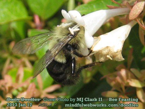 Bee Feasting